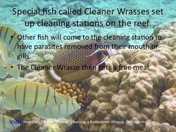 Fun Fish Facts Slideshow