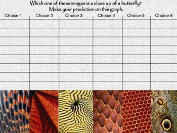 Fun Interactive Butterfly Prediction Graph