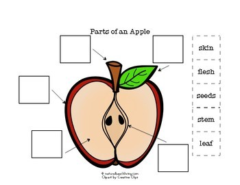 Apple Activities and Parts of an Apple