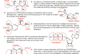 Functional Groups: Identifying Major Functional Groups in Biological Molecules