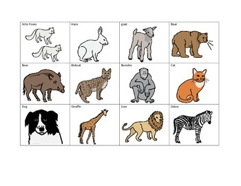 Functional Work Station: Classification of Animals