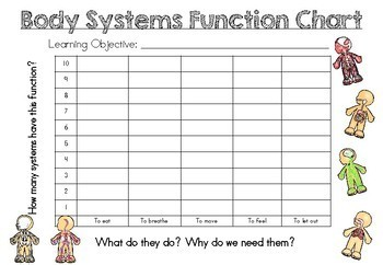 Functions of Body Systems - Bar Chart