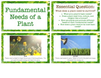 Fundamental Needs of a Plant - Botany Studies