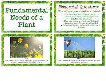Fundamental Needs of a Plant - Botany Studies