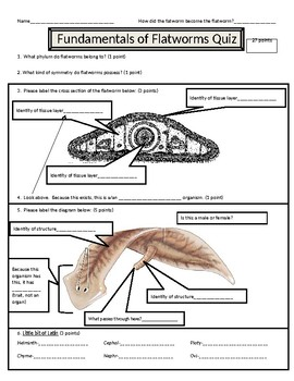 Fundamentals of Flatworms (Phylum Platyhelminthes) Quiz