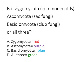 Fungi Phyla- Interactive Review PowerPoint plus Quiz