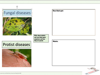 Fungal and protist diseases