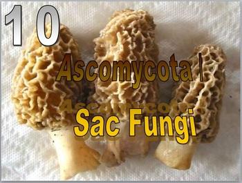 Kingdom Fungi Lesson