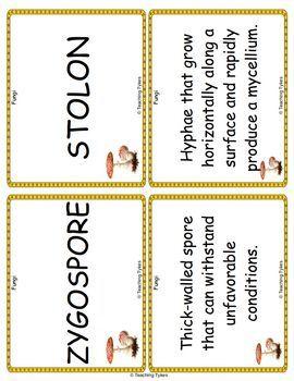 Fungi Vocabulary Cards