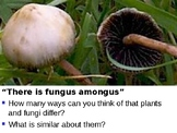 Fungi Kingdom Notes