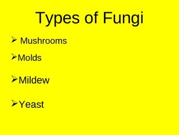 Fungi Kingdom PowerPoint Presentation