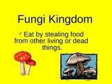 Fungi Kingdom PowerPoint Presentation