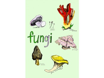 Fungi Powerpoint Presentation