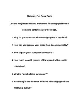 Fungi Stations Activity