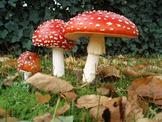 Fungi, mold, algae and more! Plant like organisms
