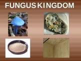 Fungi/Fungus Kingdom Powerpoint