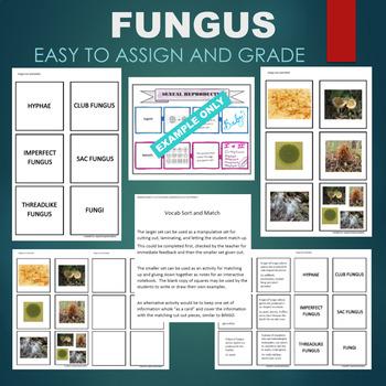 Fungi (Club, Sac, Imperfect, Threadlike, Hyphae) Sort & Match Activity