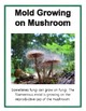 Fungus Posters