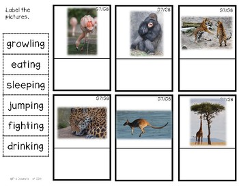 G8 Labeling Zoo Animal Action Photos
