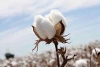 Georgia Studies Cotton Exposition Activity