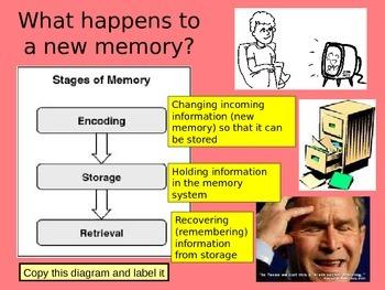 GCSE Psychology Multi Store Memory