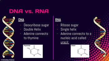 GENETICS: DNA, RNA, and Protein Synthesis Slide Deck! NGSS!