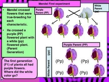 MENDILIAN GENETICS INTRO