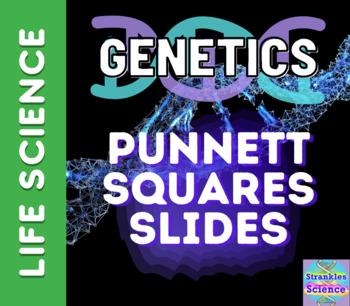 GENETICS: Punnett Squares How-To Slide Deck!