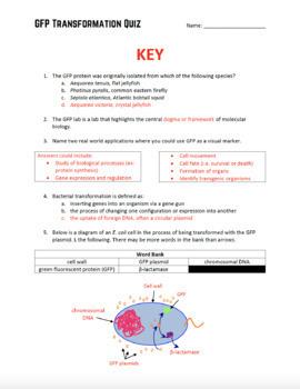 GFP Bacterial Transformation Quiz