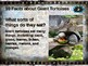 GIANT TORTOISES: 10 facts. Fun, engaging PPT (w links & free graphic organizer)