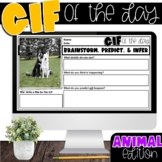 GIF of the Day | Picture of the Day | JANUARY EDITION TPT Easel
