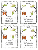 Butterfly Life Cycle-GLAD scout awards