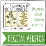 GOOGLE CLASSROOM: Digital Dichotomous Key {Coniferous Tree