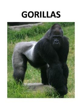 GORILLAS (GRADES 4 - 5)