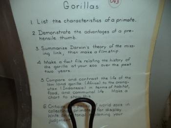 GORILLAS   #043