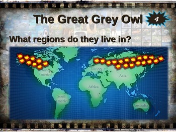 GREAT GREY OWLS: 10 facts. Fun, engaging PPT (w links & free graphic organizer)