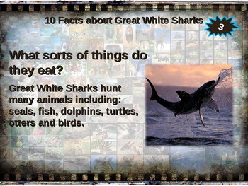 GREAT WHITE SHARKS: 10 facts. Fun, engaging PPT (w links & graphic organizer)