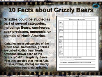 GRIZZLY (BROWN) BEAR: 10 facts, engaging PPT, links, free graphic organizer)