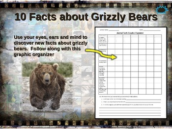 GRIZZLY (BROWN) BEAR: 10 facts, engaging PPT, links, free