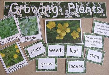 GROWING PLANTS thematic unit