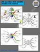 GROWTH MINDSET ACTIVITY: MIND MAPS, WRITING, CREATIVITY, T