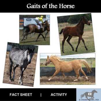Gaits of the Horse Activity
