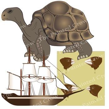 Galapagos Clip Art - Darwin - Evolution - Color & Blackline Illustrations