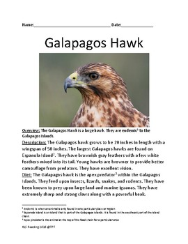 Galapagos Hawk - informational article facts questions word search