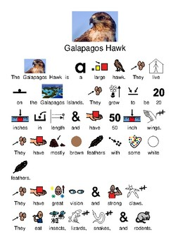 Galapagos Hawk - picture supported text lesson visuals questions information