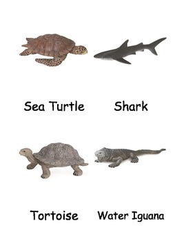 Galapagos Island Animals Nomenclature