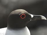 Galapagos Islands Animal Photographs