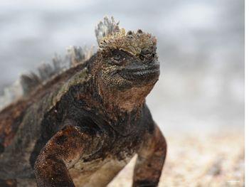 Galapagos Islands Iguana and Giant Tortoise Photographs