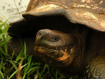 Galapagos Islands Iguana and Giant Tortoise Photographs