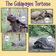 Galapagos Islands Photographs